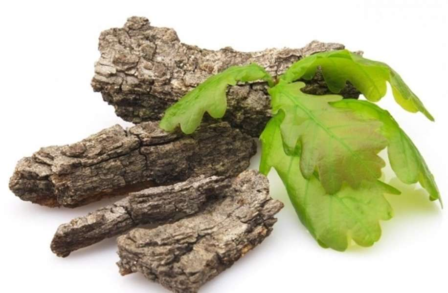 Особую популярность кора дуба приобрела при импотенции, которая вызвана нарушением простаты
