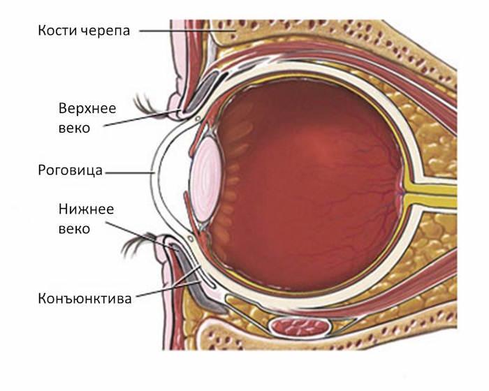 Опух внутренний уголок глаза у ребенка thumbnail