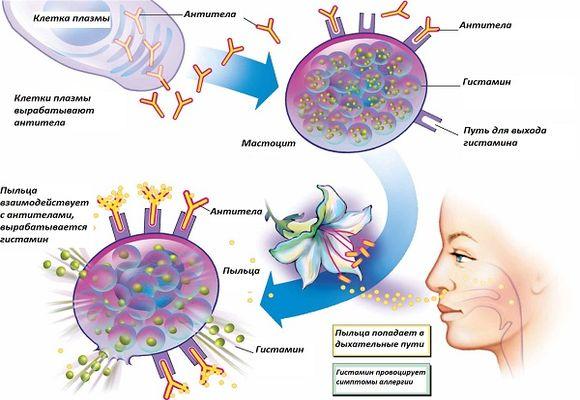 Аллергены провоцирующие ринит