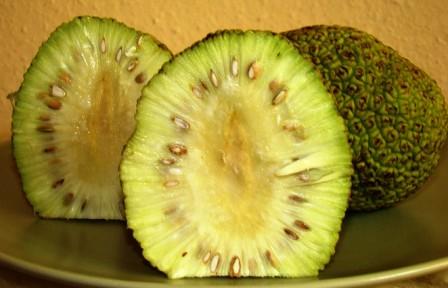 Адамово яблоко лечебные свойства и применение
