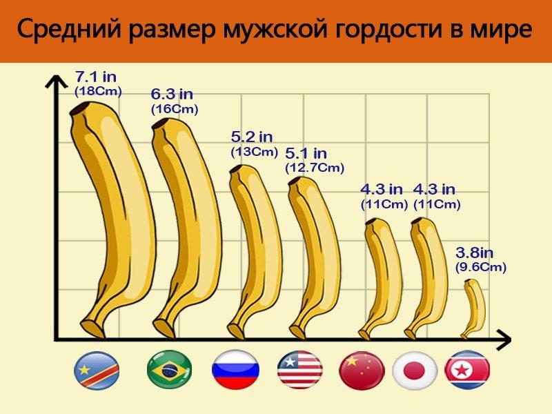 Размер члена зависит от расы человека.