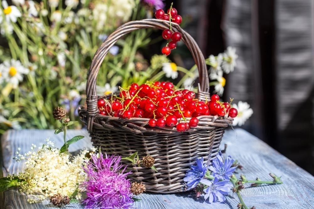 Ягоды красной смородины полезны взрослым и детям