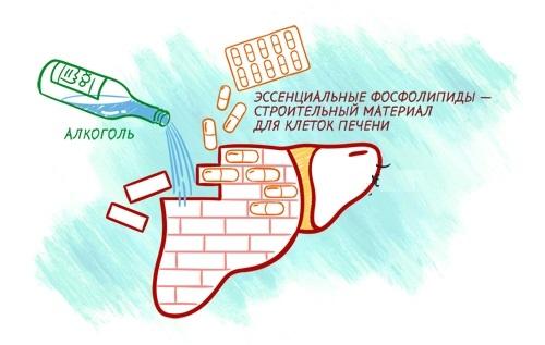 Польза Гепагарда Актив