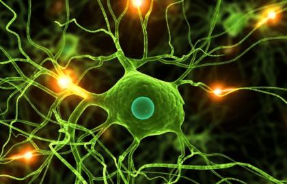 ействие зарина на нервные клетки