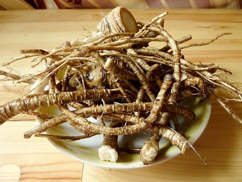 Сгнившие поврежденные корни не годятся для использования в последующем