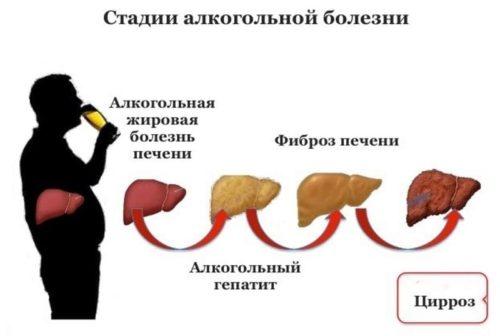 Как разрушается печень у человека