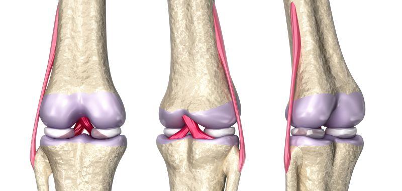 Виды связок коленного сустава