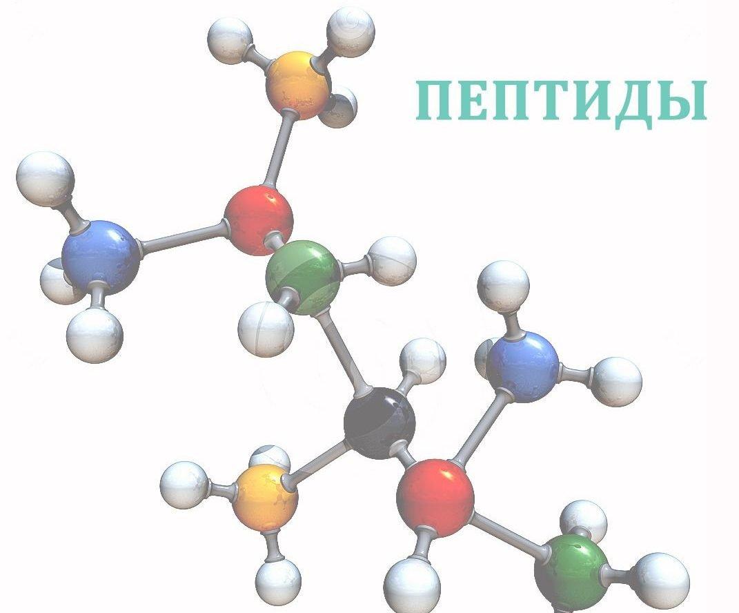 Производство пептидов в организме с возрастом снижается