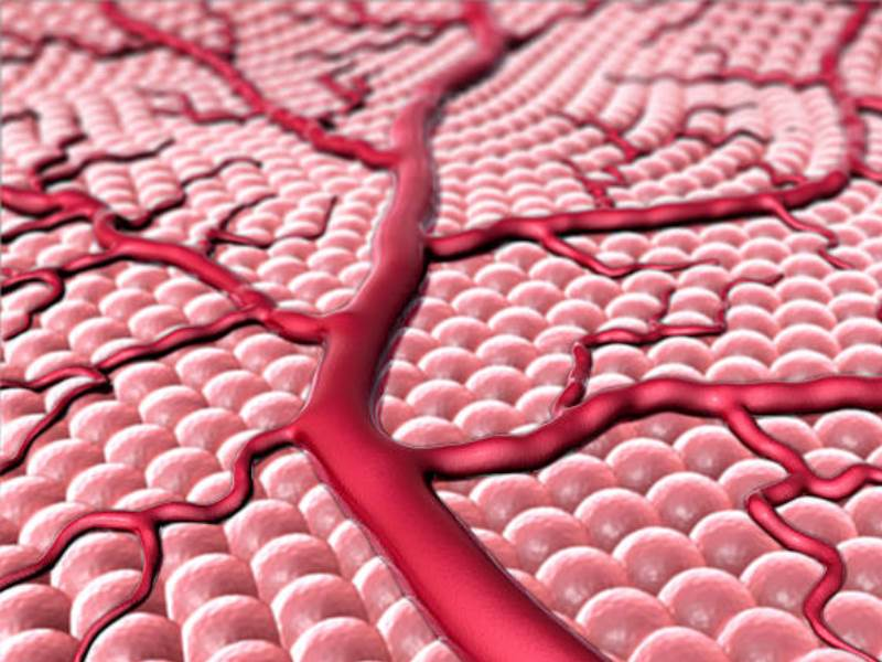 Классификация портальной гипертензии