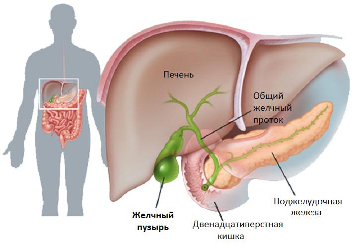Внутрипеченочный и внепеченочный холестаз