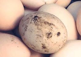 Помет попадает на скорлупу яйца