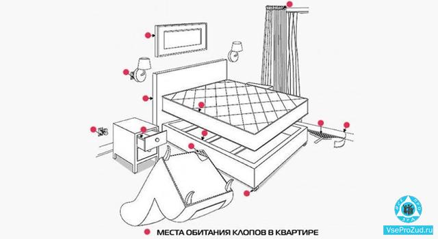 места обитания клопов в квартире