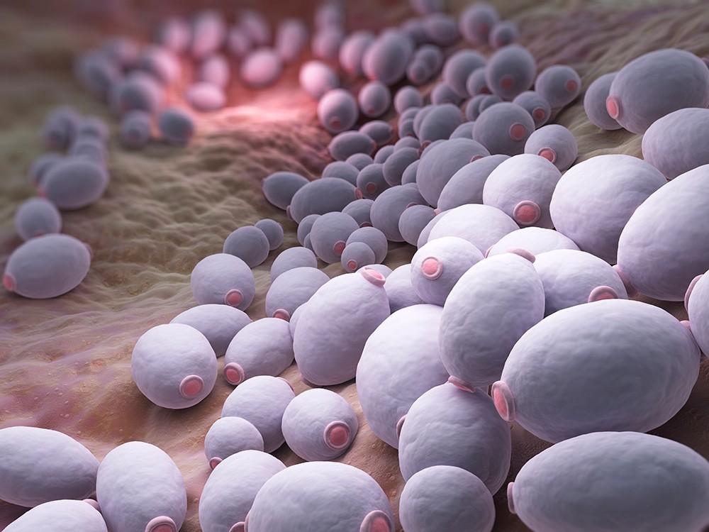 Дрожжеподобный гриб Candida