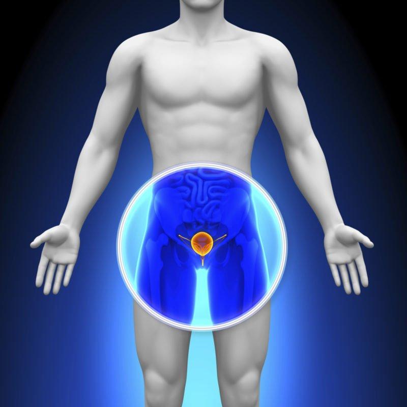 Главная функция яичек заключается в продуцировании половых гормонов и выработке семенной жидкости.