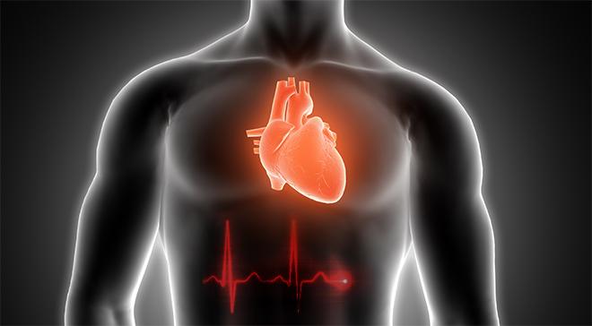Сердечный пульс