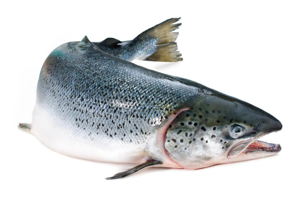 Живая рыба требует правильного хранения