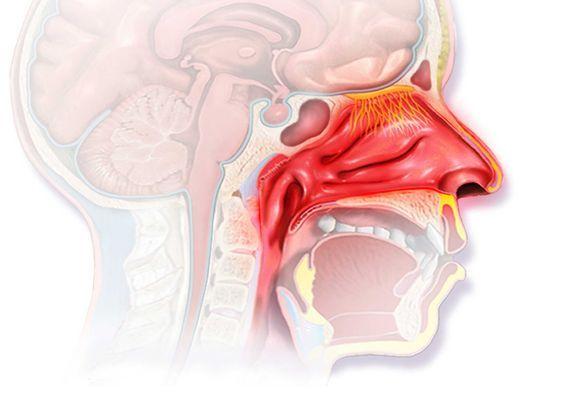 рисунок внутри рта и носа